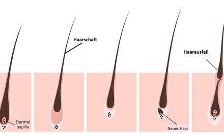 Wie setzt sich der Haarschaft zusammen?