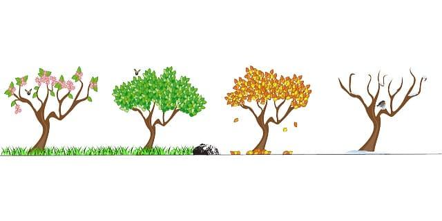 Wachsen Haare im Sommer schnell - Frühling, Herbst und Winter