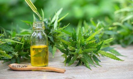 Hanföl bei Haarausfall – viele gesunde Inhaltsstoffe