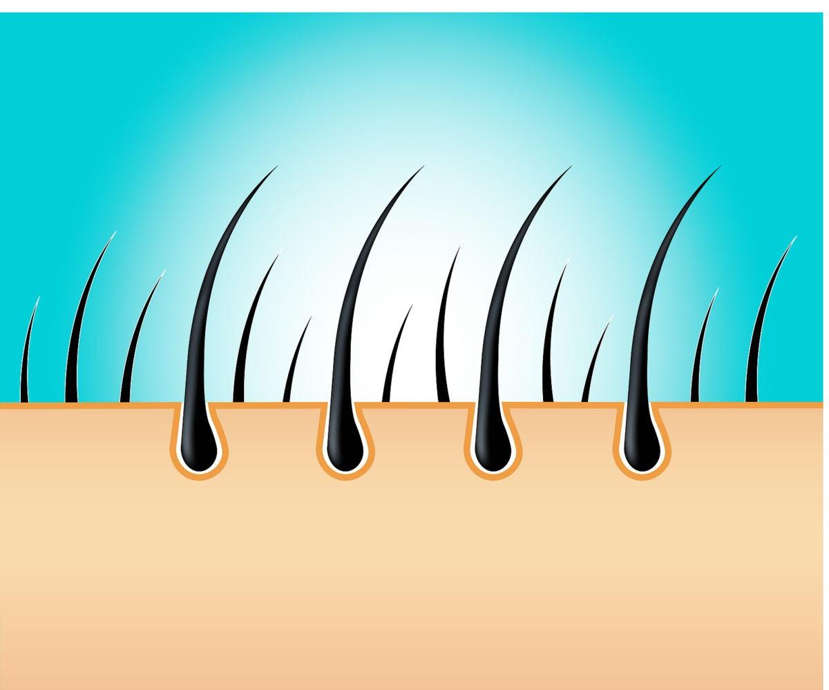 Wie schnell wachsen Haare